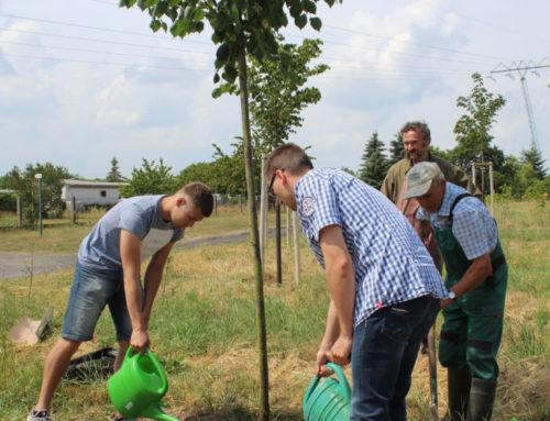 Für den Frieden und Klimawandel – Friedenswald II