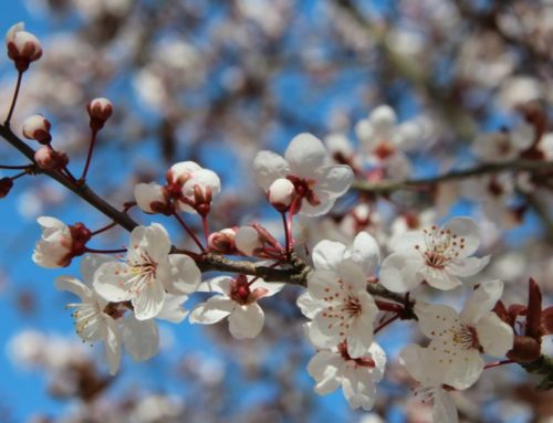 Frühlingsgedicht